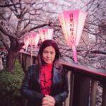 満月までの7日間!!桜まつり!!